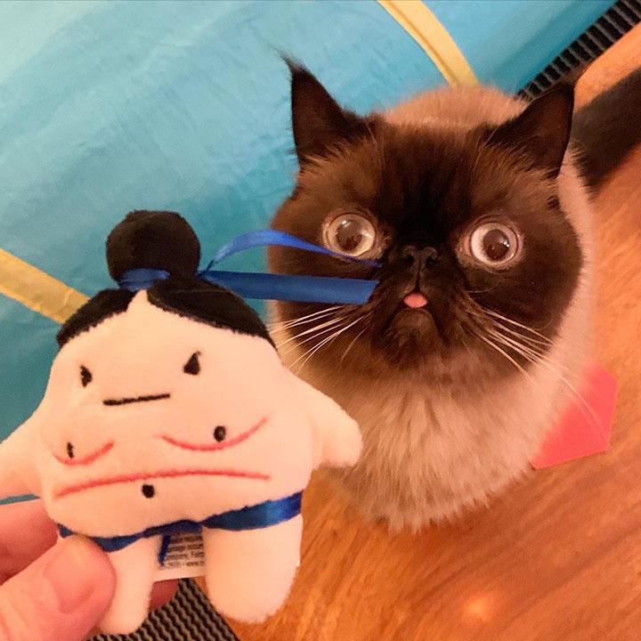 El gato de las caras graciosas junto a juguete