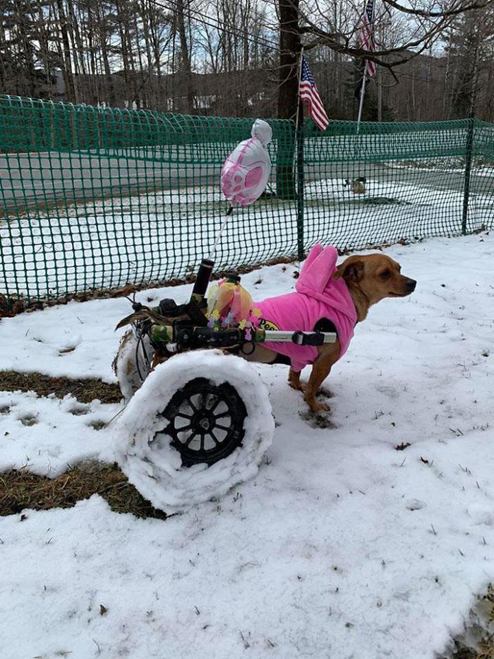 Mujer adopta perros con necesidades especiales