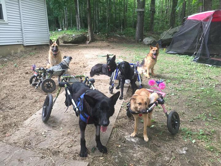 pandilla de perros adoptados, con necesidades especiales