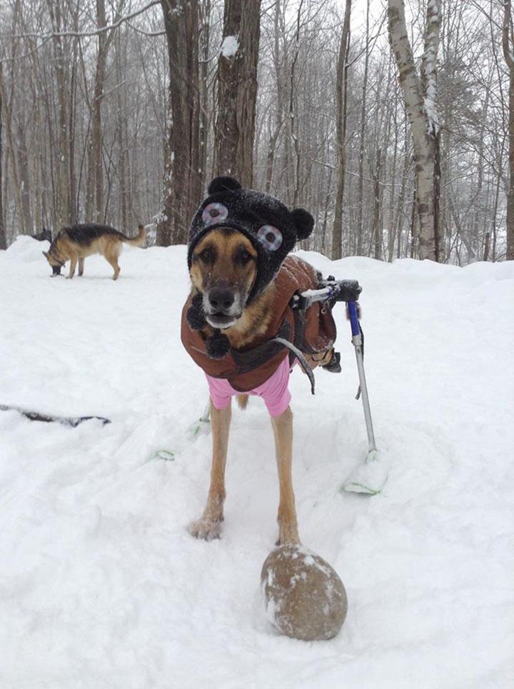 perro con necesidades especiales en invierno disfrutando un paseo