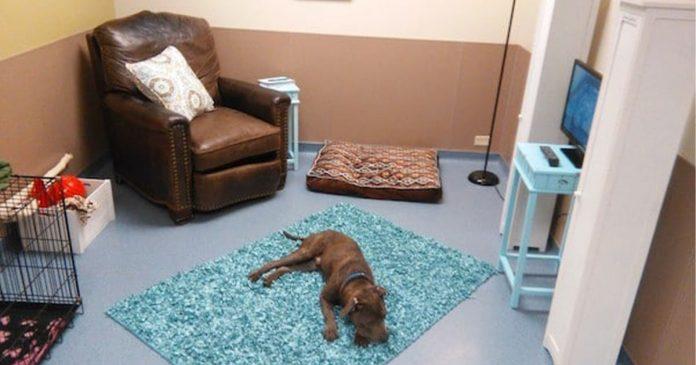 refugio crea una falsa sala de estar para ver la reacción de los perros.