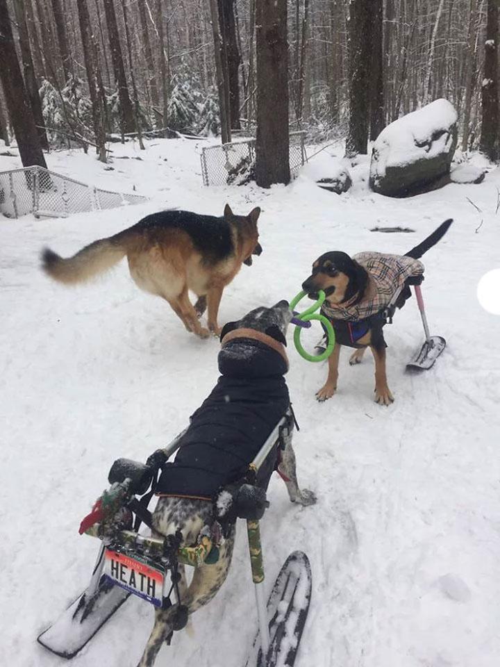 Mujer adopta a perros y les llama The fowler herd