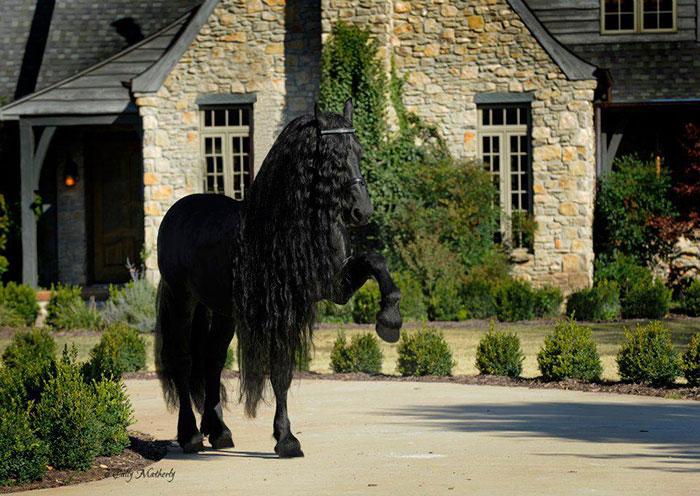 Este caballo es considerado por muchos el más guapo del mundo