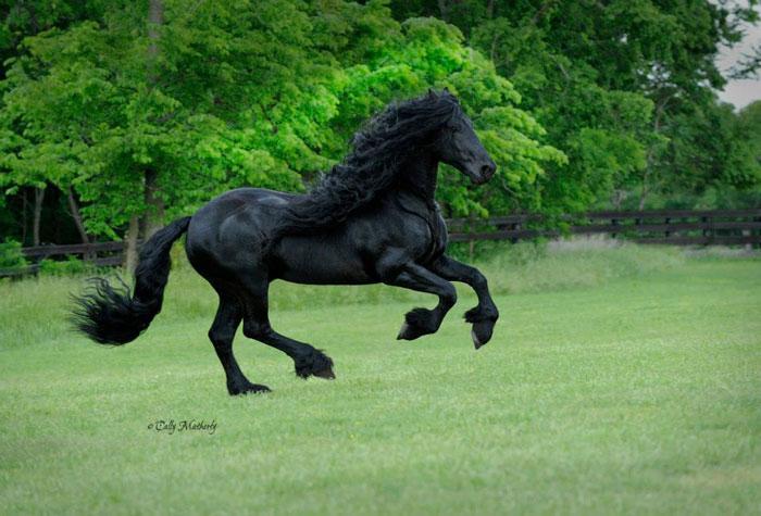 Este caballo es considerado por muchos el más guapo