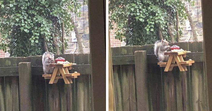 Hombre construye pequeña mesa de picnic para ardillas en su patio