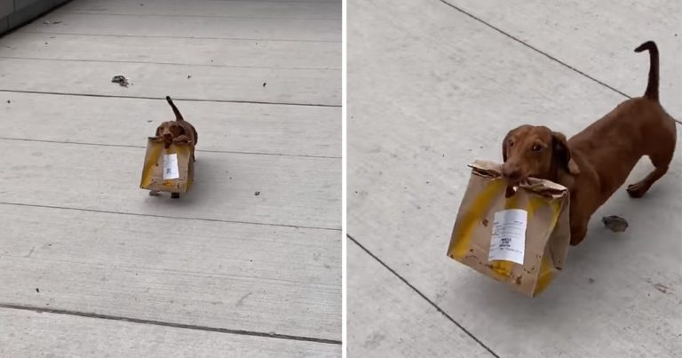 Perrito es captado trayendo comida para llevar a casa de su familia