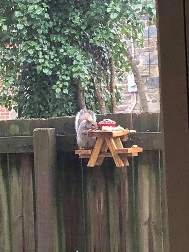 ardilla en su mesa de picnic