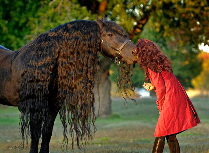 caballo es considerado por muchos el más guapo del mundo