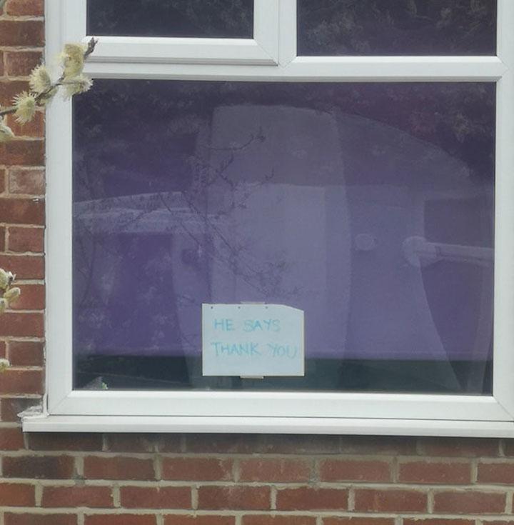 carteles para conocer las mascotas de los vecinos en las ventanas