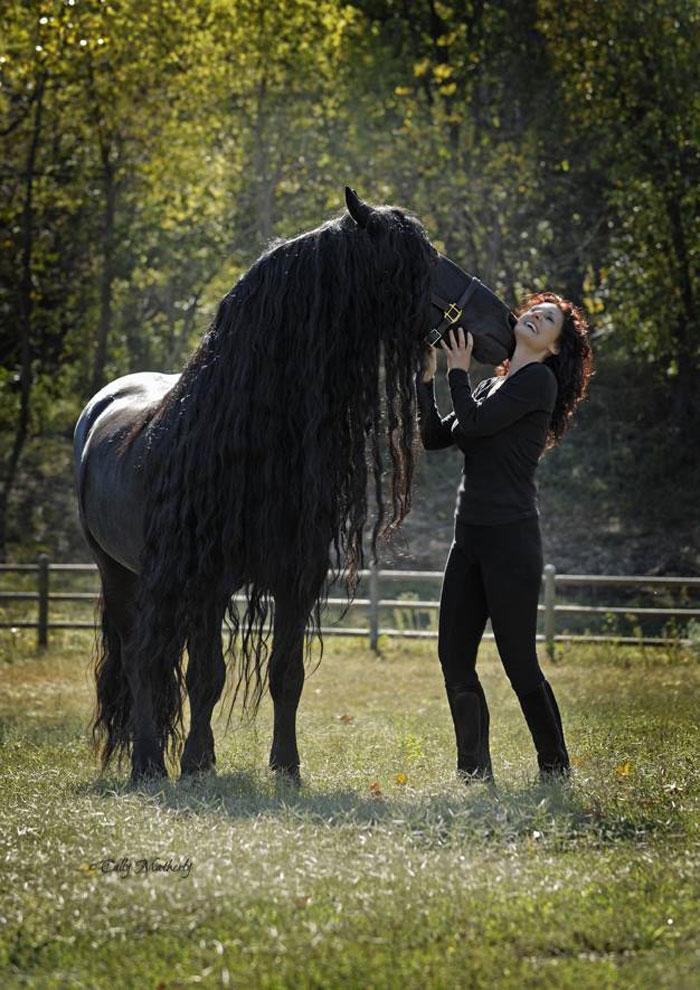 el caballo mas guapo del mundo frederick