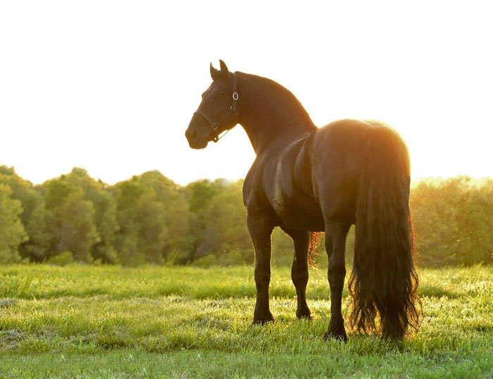 el caballo mas guapo del mundo