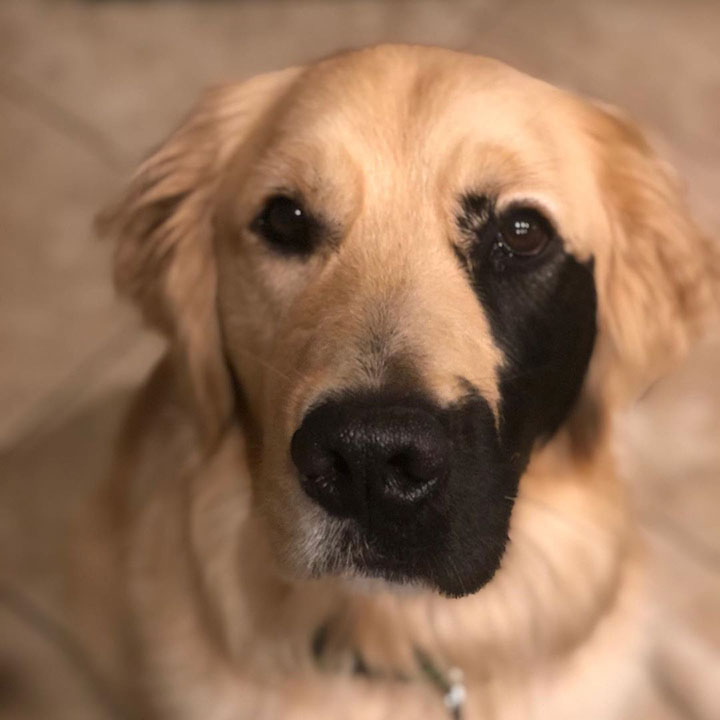 Enzo el perro con adorable mutación genética