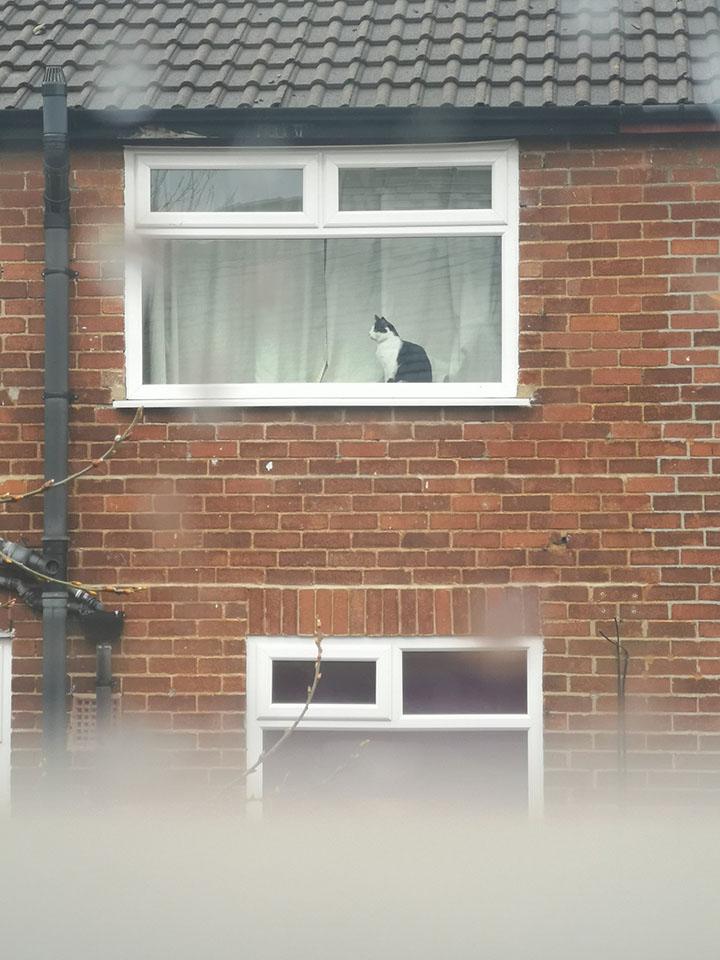 por carteles se conocen los gatos de vecinos