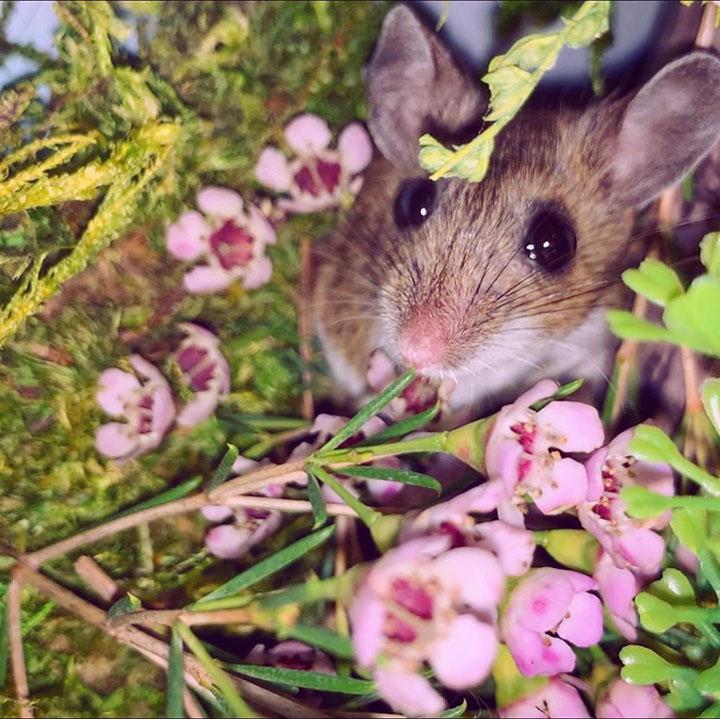 pequeño ratón que ama la hora del baño