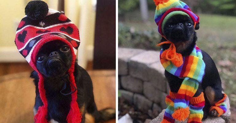 Perro tiene una cara de mal humor permanentemente que lo hizo volverse viral