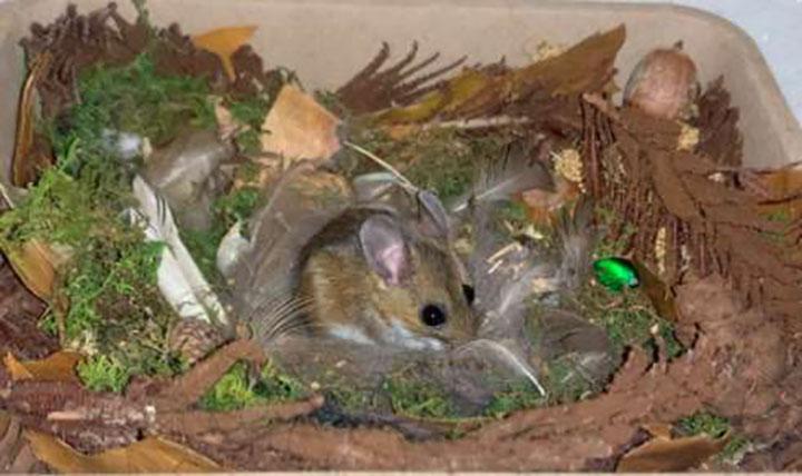 ratón rescatado adora la hora del baño