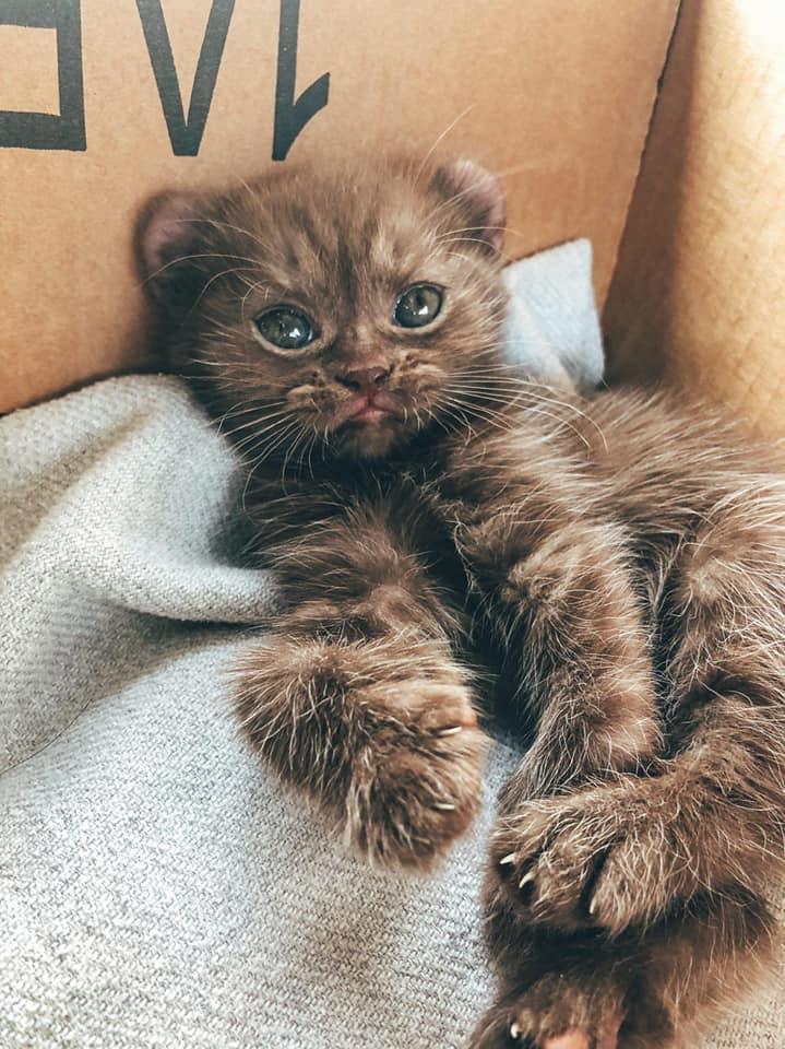 Gatito con patas torcidas y orejas de oso obtiene los padres adoptivos perfectos