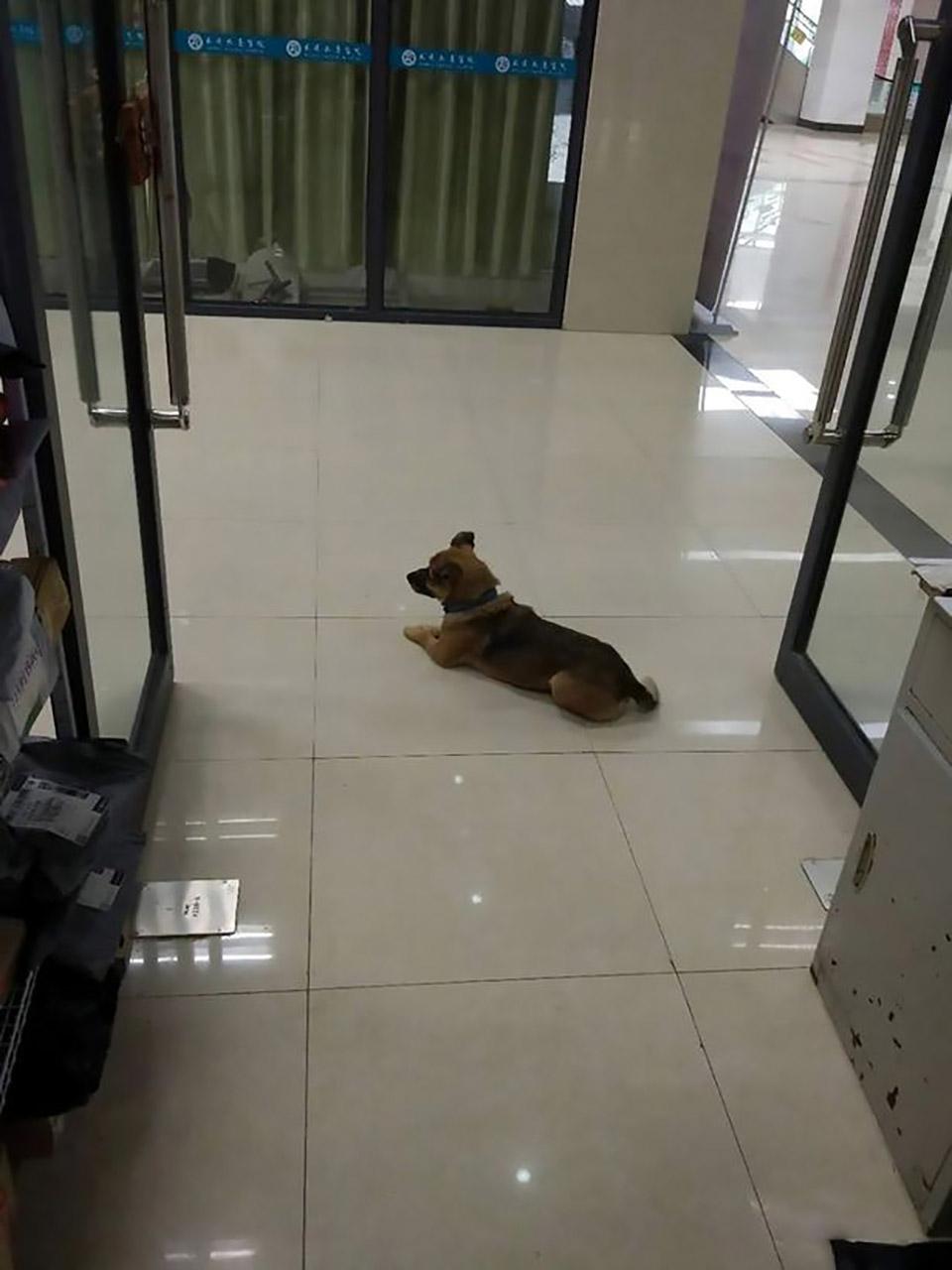 Perrito esperando dueño hospital