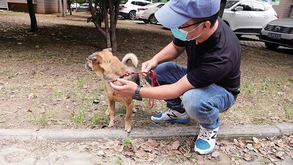 Perro espera hospital Wuhan