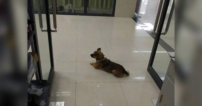 Perro fiel espera tres meses dueño hospital