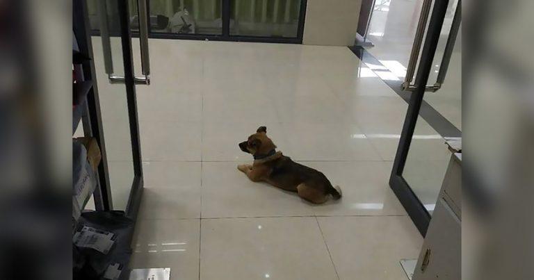 Perro fiel espera en un hospital de Wuhan durante tres meses a su dueño que falleció por Covid-19