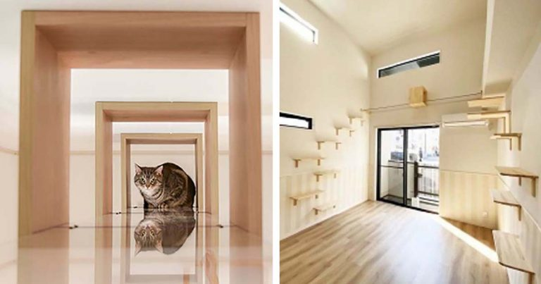 Apartamentos en Japón para solteros con gatos son perfectos para vivir con tu compañero