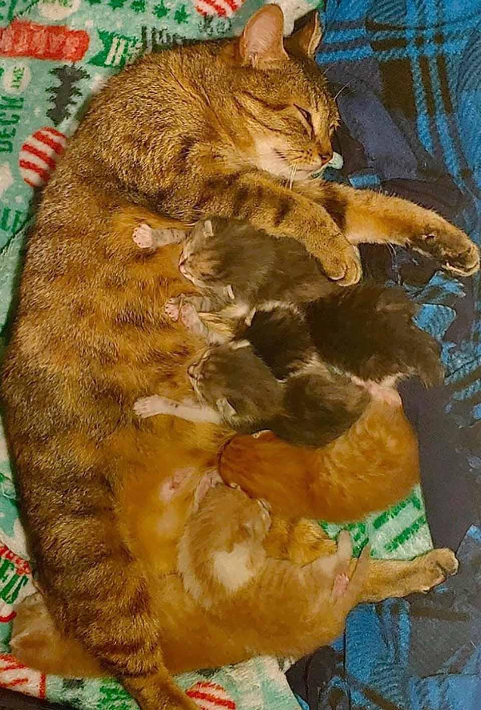 gata junto a sus gatitos