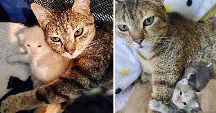 gata sin hogar maúlla feliz al ver a sus gatitos