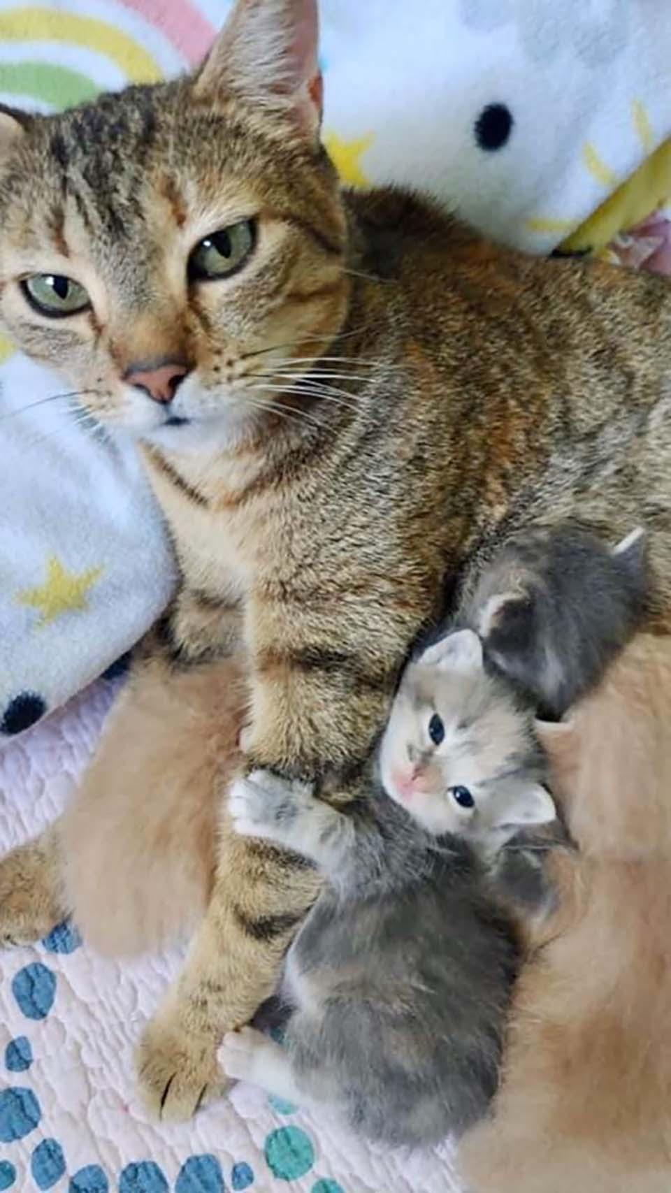 gata y sus pequeños