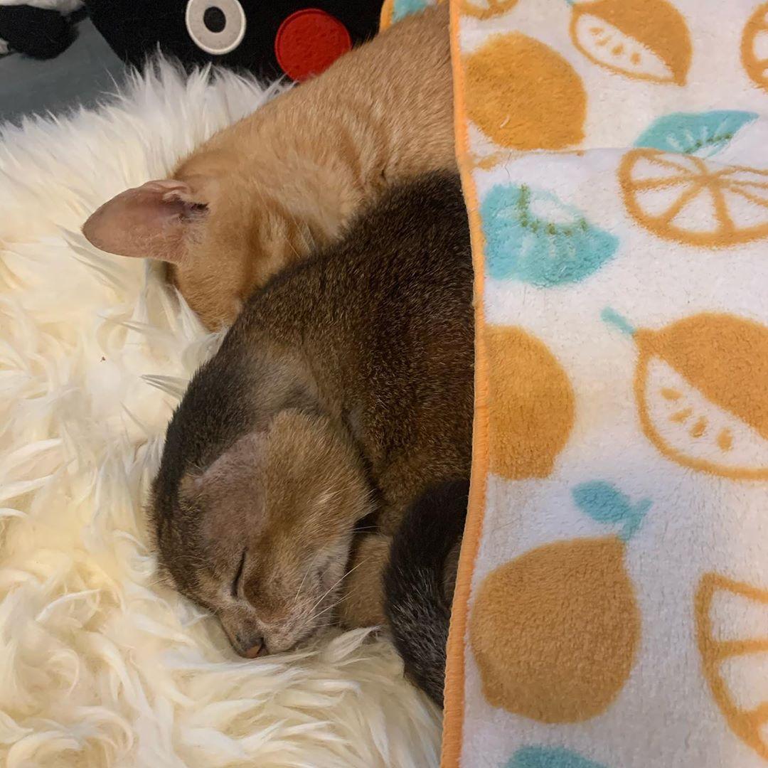 gato encuentra hogar y ahora tiene un hermano
