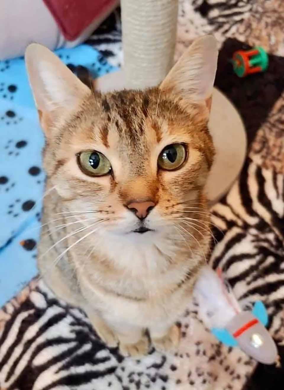 hermosa gata rescatada
