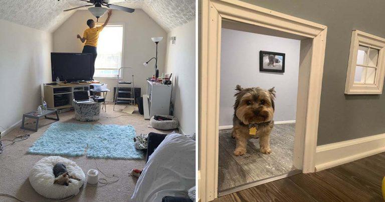 Mujer convierte una habitación de repuesto en una mini 'mansión' para sus perros