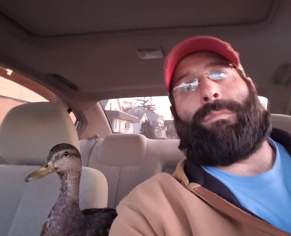 pato en el auto