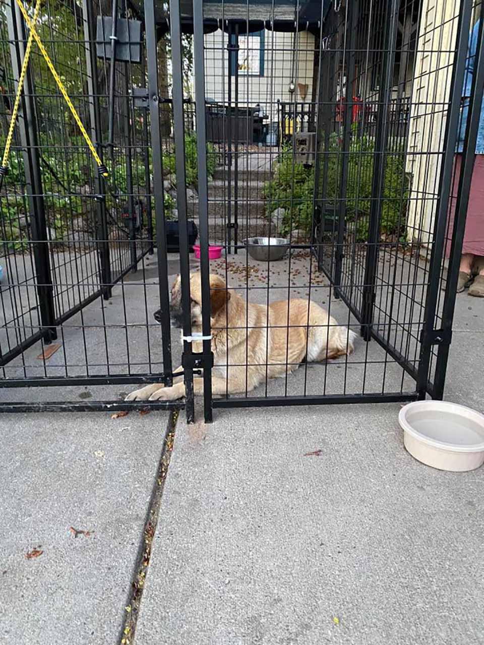 perrito en una jaula