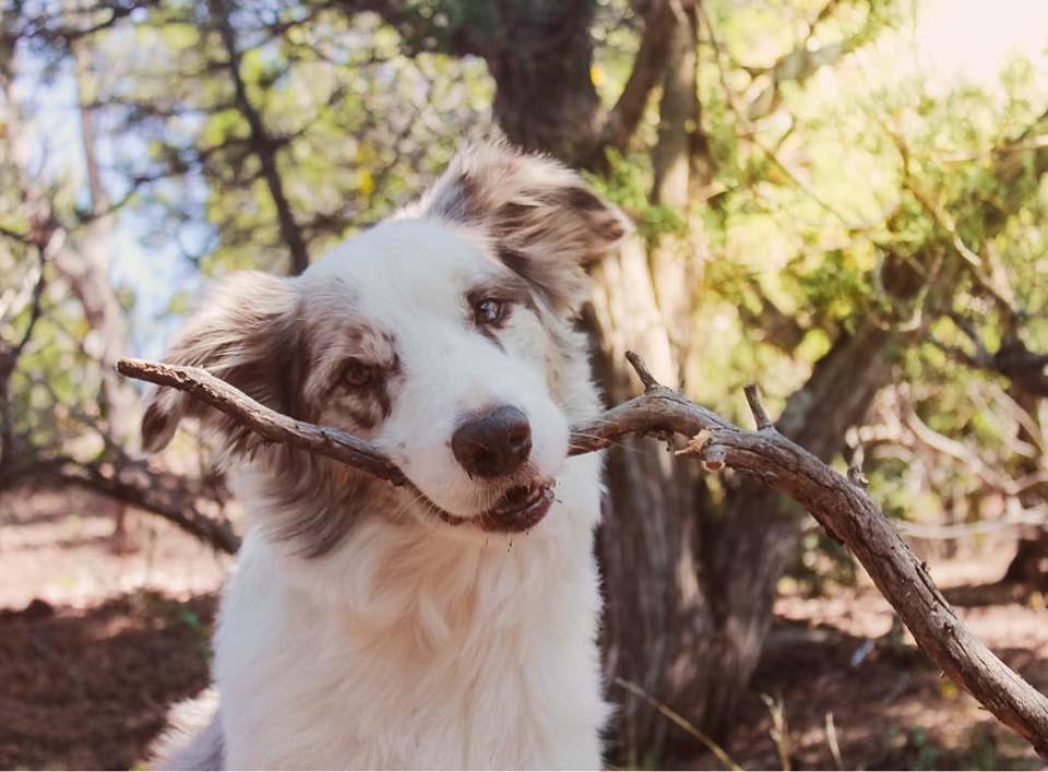 perro disfruta el bosque