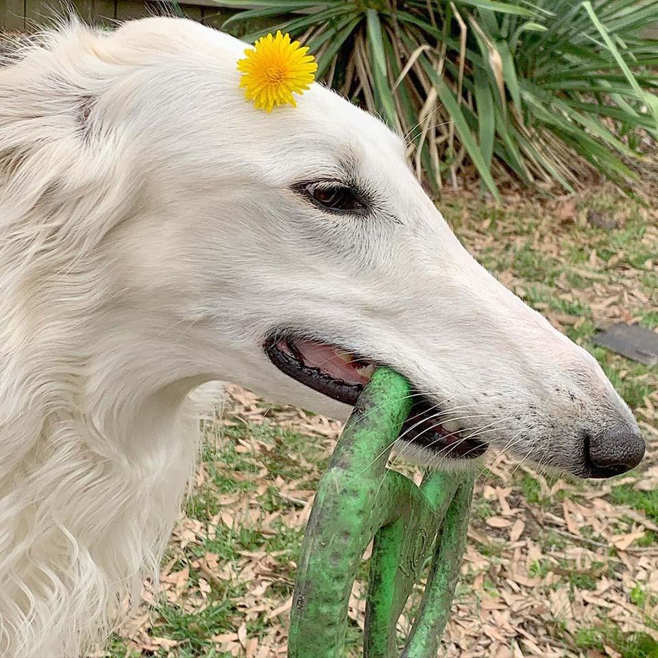 perro en el jardín