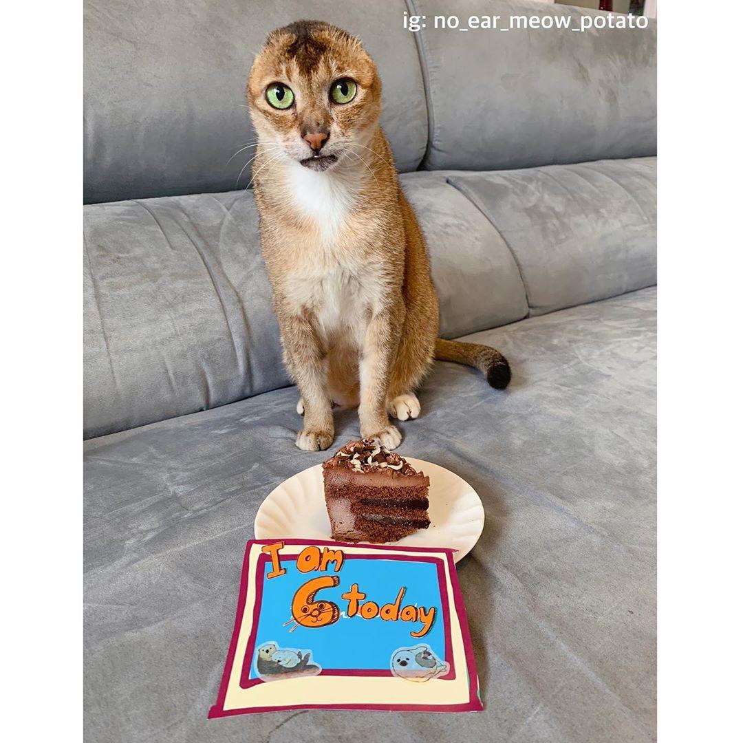 gato sin orejascelebra su cumpleaños