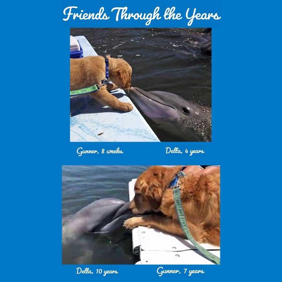 Perro y un delfín