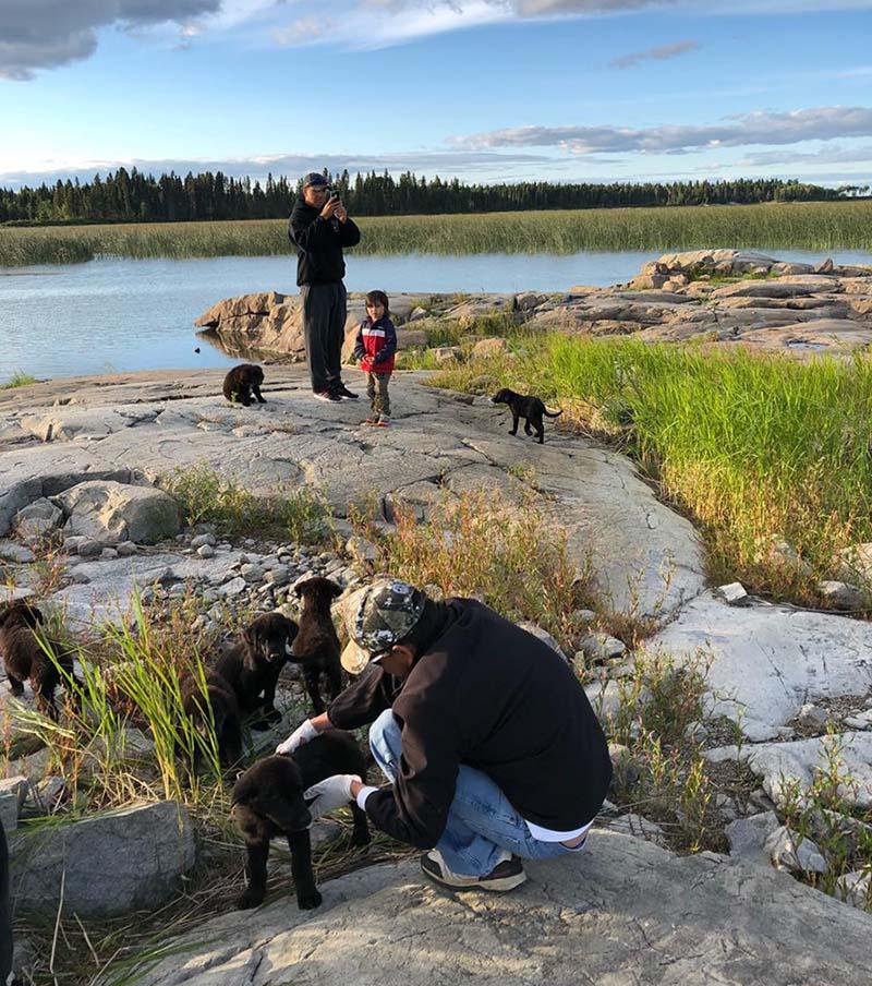 Cachorros abandonados isla