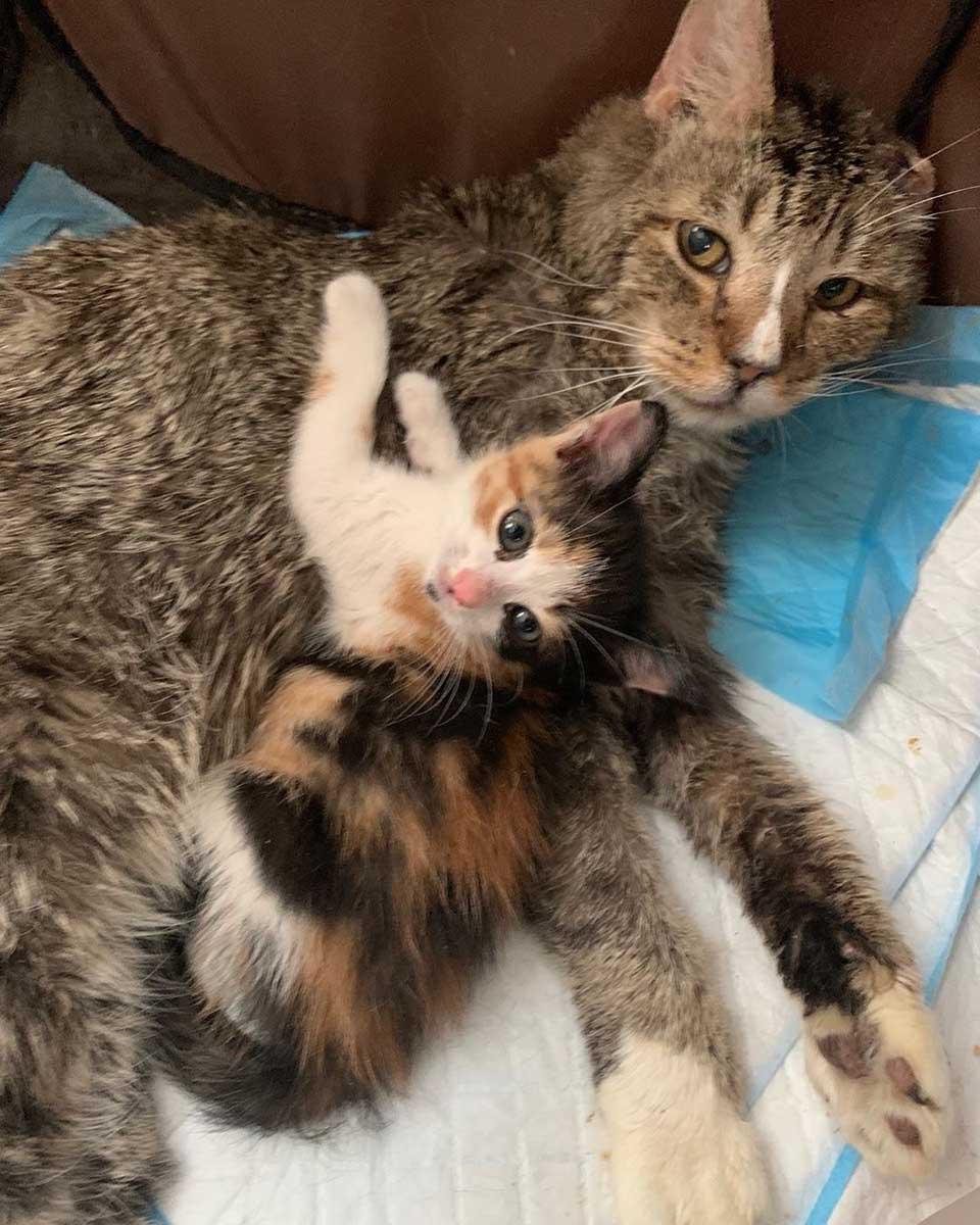 Dulce gato cuida gatito