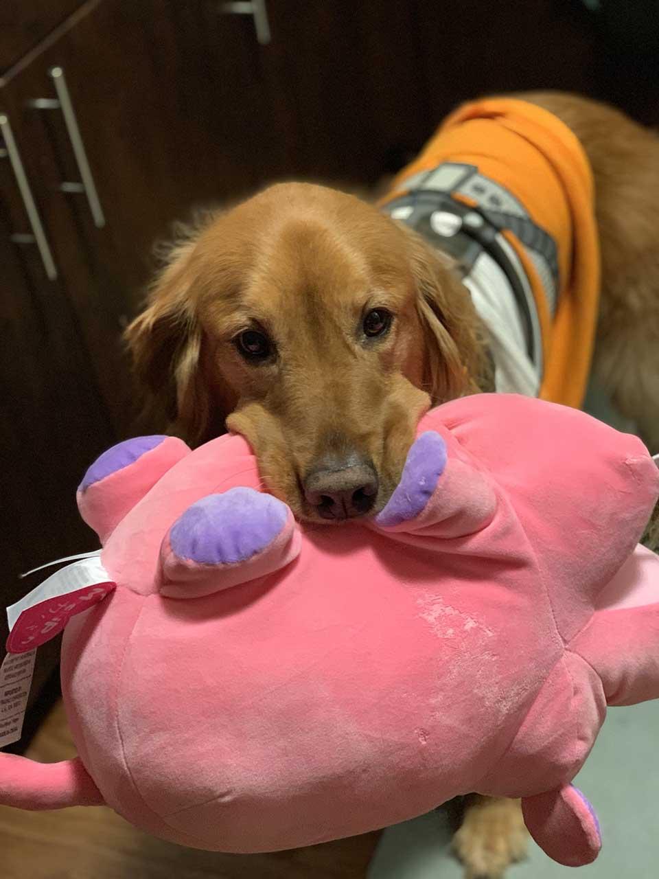 Dulce perro y peluche