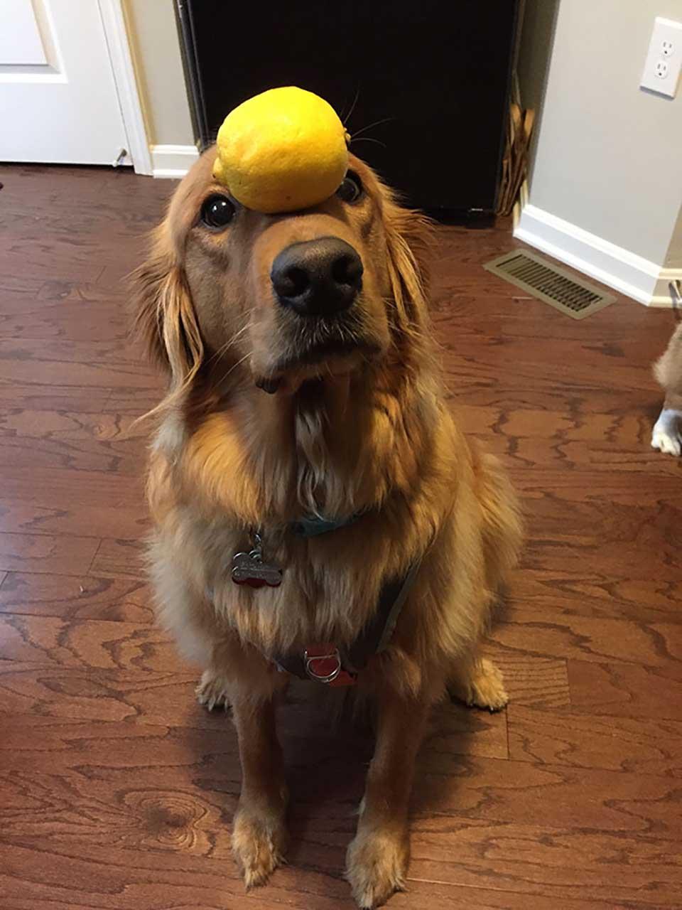 Equilibrio con pelota