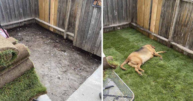 Perro rescatado que nunca tuvo un patio se sorprende cuando le construyen uno