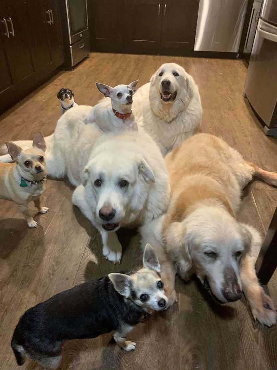 Familia de perritos