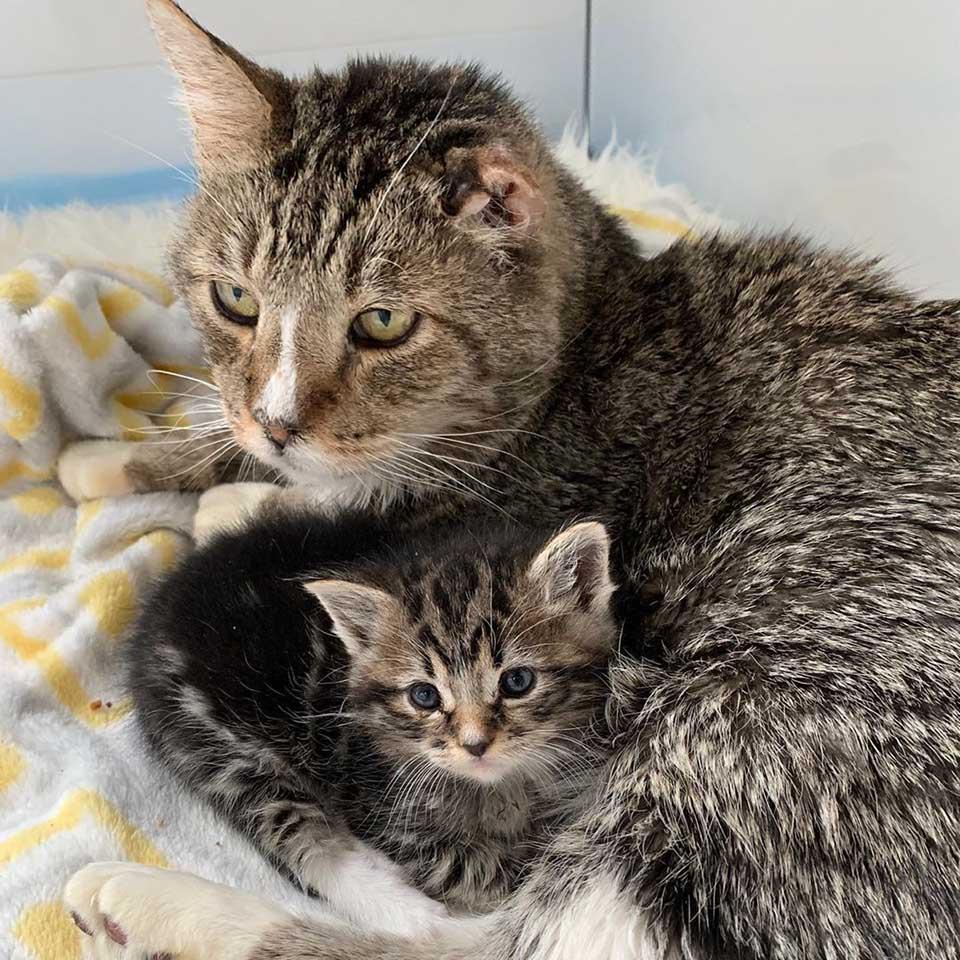 Felinos rescatados