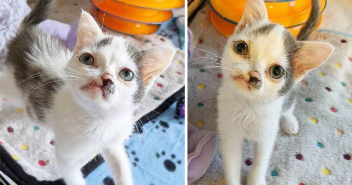 Gatito diminuto está feliz de recibir atención