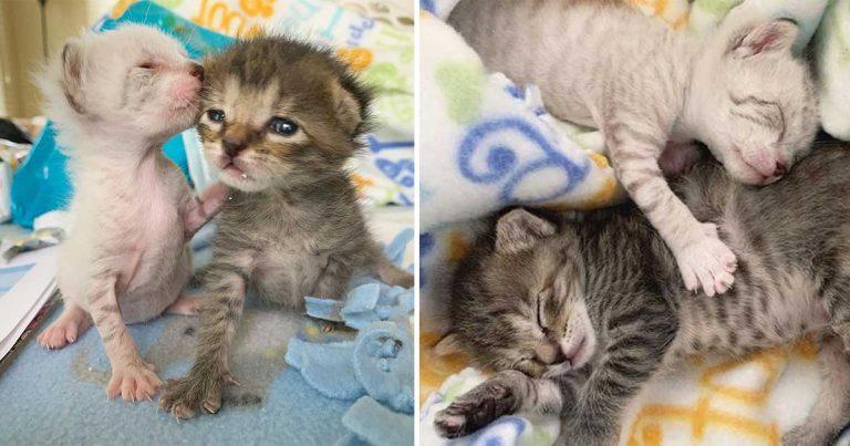 Estos gatitos se cuidan el uno al otro volviéndose inseparables