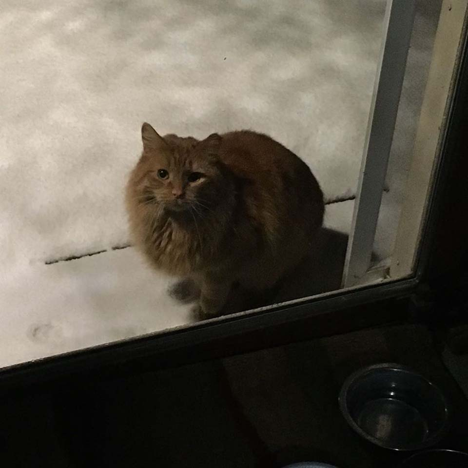 Gato a través de la ventana