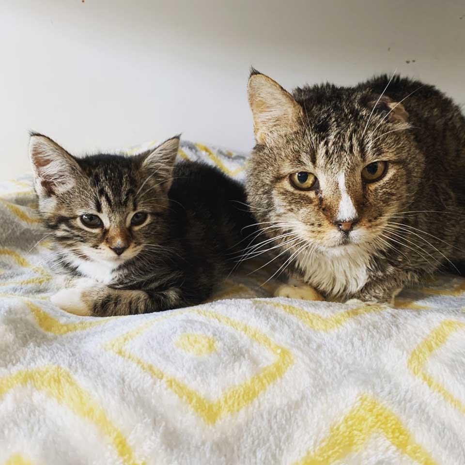 Gato sin hogar cuida gatitos