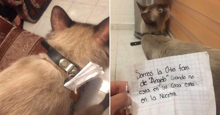 Gato llega a casa con una nota en su collar que revela su doble vida